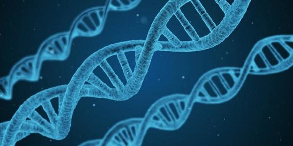 Krypto lagras i DNA istället för Bitcoin Wallet